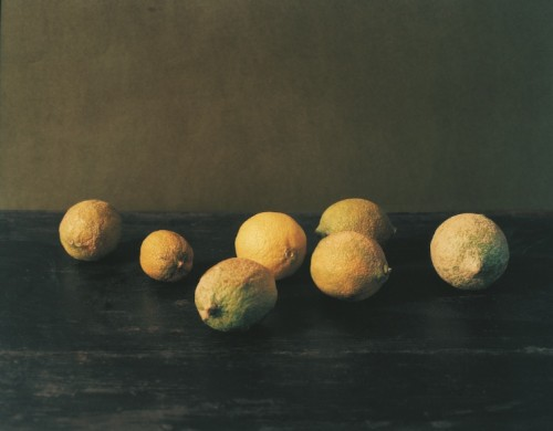Patrick Faigenbaum, Citrons, Santulussurgiu [Lemons, Santulussurgiu], 2006 silver chromogenic print